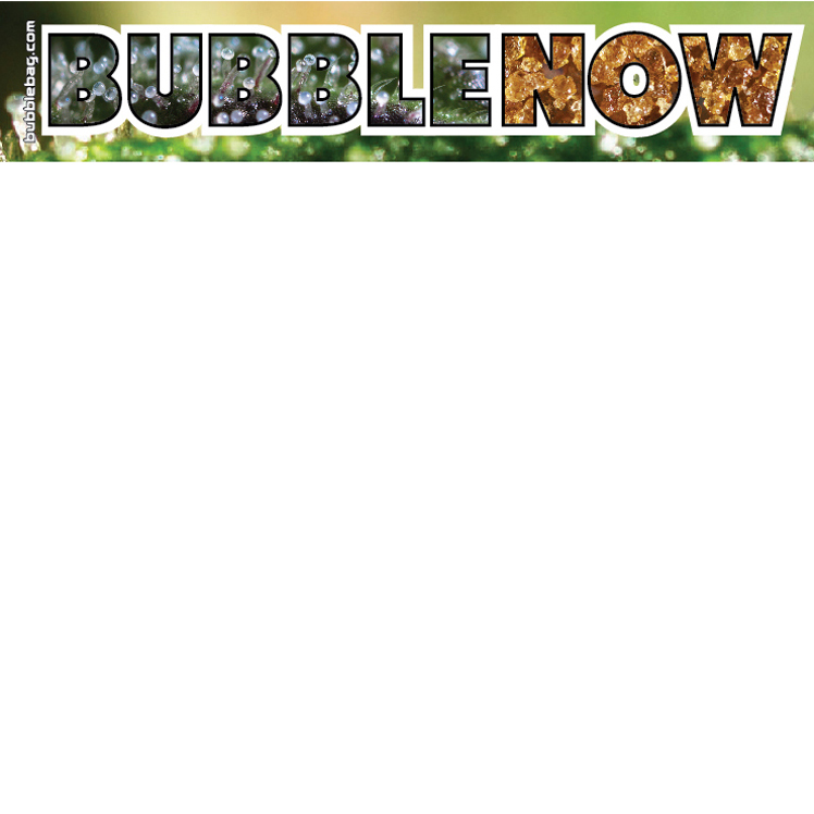 Bubble Now Sticker